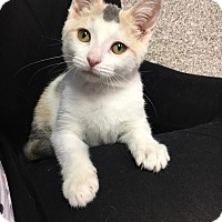 Adopt A Pet :: Polly - Columbus, OH