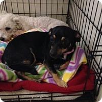 Adopt A Pet :: Berry - Las Vegas, NV