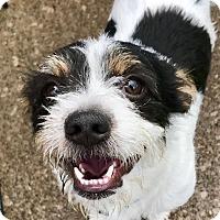Adopt A Pet :: Jack O'Lantern - Cleveland, OH