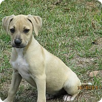 Adopt A Pet :: Kylie - West Springfield, MA
