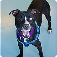 Adopt A Pet :: Warbie - Portsmouth, VA