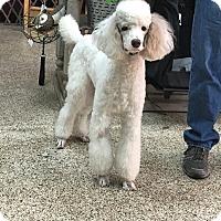 Adopt A Pet :: Aurora - Thousand Oaks, CA