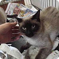 Adopt A Pet :: CROW - Pearland, TX
