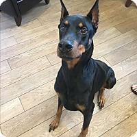Adopt A Pet :: Draco - Myakka City, FL