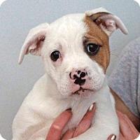 Adopt A Pet :: Sienna-PENDING - Garfield Heights, OH