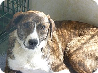 Hound (Unknown Type) Mix Dog for adoption in Paron, Arkansas - WILLOW