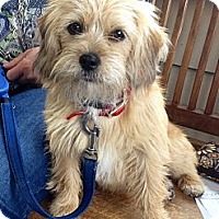 Adopt A Pet :: Stella - Bristol, TN