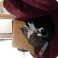 Adopt A Pet :: Sisters - Chandler, AZ