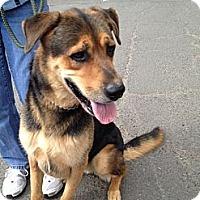 Adopt A Pet :: Thor - Rockaway, NJ