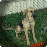 Adopt A Pet :: piper - Henderson, KY
