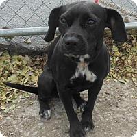 Adopt A Pet :: Emma - Gary, IN
