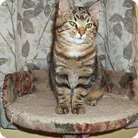 Adopt A Pet :: Mocha - Acme, PA