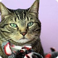 Adopt A Pet :: Mickey - Fresno, CA
