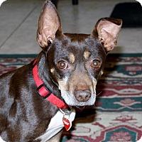 Adopt A Pet :: Maverick - Watch my new video! - Bellflower, CA