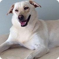 Adopt A Pet :: Rosie - Citrus Springs, FL