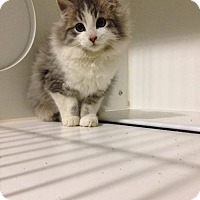 Adopt A Pet :: Peek - Caistor Centre, ON