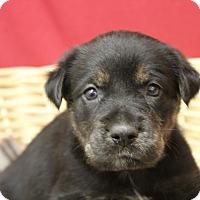Adopt A Pet :: Gwen - Waldorf, MD