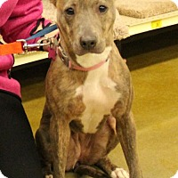 Adopt A Pet :: Minnie - Kennesaw, GA