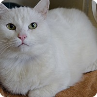 Adopt A Pet :: Libby - Michigan City, IN