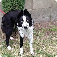 Adopt A Pet :: DING - San Pedro, CA