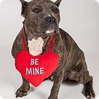 Adopt A Pet :: Gladys - Alpharetta, GA