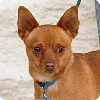 Adopt A Pet :: Tiny - Palmdale, CA