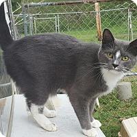Adopt A Pet :: Frosty - Ararat, VA