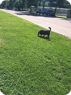 Labrador Retriever Mix Dog for adoption in Sioux Falls, South Dakota - Bentley
