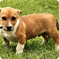 Adopt A Pet :: Lucas - Windham, NH