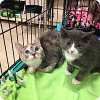Adopt A Pet :: Caddie and Camille - sisters! - Ephrata, PA