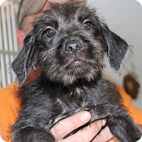 Adopt A Pet :: Guam - Harmony, Glocester, RI