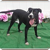 Adopt A Pet :: PRINCE see also HENNESY - Marietta, GA