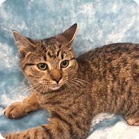 Adopt A Pet :: Zena - Highland Park, NJ
