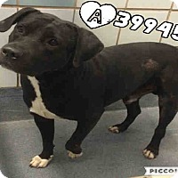 Adopt A Pet :: TBone - CASCADE, WI