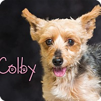 Adopt A Pet :: Colby - Somerset, PA