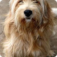 Adopt A Pet :: Buick - Woonsocket, RI