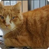 Adopt A Pet :: Toemanagi - Brooklyn, NY