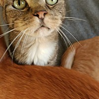 Adopt A Pet :: Mouse - Clarkson, KY