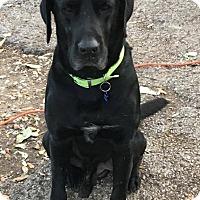 Adopt A Pet :: Oden - Boerne, TX