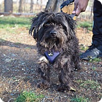 Adopt A Pet :: Hermie - Whitehall, PA