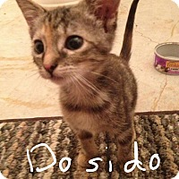 Adopt A Pet :: Do si do - Wichita Falls, TX
