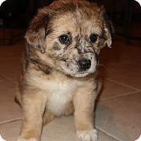 Adopt A Pet :: Delany - Saratoga, NY