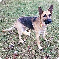 Adopt A Pet :: Jackie - New Ringgold, PA