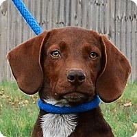 Adopt A Pet :: **SPROCKET** - Mukwonago, WI