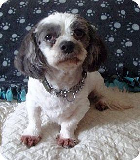 Dog Rescue Mississauga Ontario