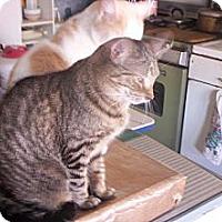 Adopt A Pet :: MITZIE - detroit, MI