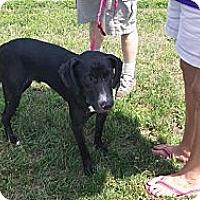Adopt A Pet :: Reid - Hancock, MI