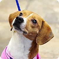 Adopt A Pet :: Jackie - Birmingham, AL