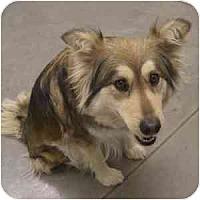 Adopt A Pet :: Misti - Phoenix, AZ