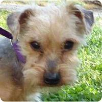 Adopt A Pet :: Rango - Allentown, PA